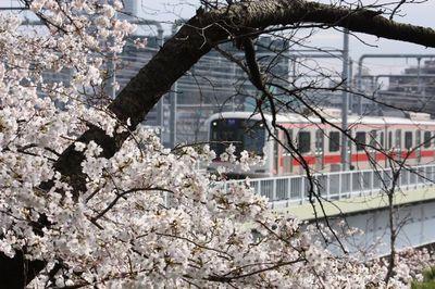 Img_2009_04_04_4837_tamagawadaikoue